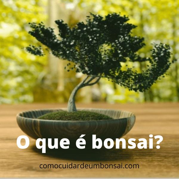o que [e bonsai como cuidar de um bonsai